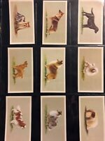 Grandee TOP DOGS dog breeds portraits set 25 cards Tobacco Cigarette