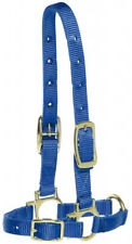Bainbridge Sheep & Goat Halter Blue