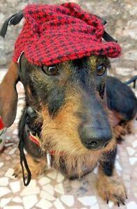 DOG CAP RED/BLACK TWEED DOG HAT DEER STALKER SMALL/MEDIUM HOUNDS LURCHER