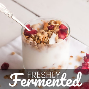Certified Organic Mediterranean Yoghurt Starter