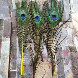 10-100pcs Beautiful Natural Peacock Feathers 25-30 cm/10-12 inches Decoration