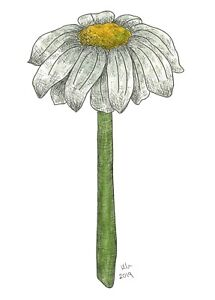 Painting by Hannah Penlington of daisy, art, flower, craft, card topper