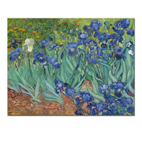 Irises by Van Gogh Fine Art Painting Reproduction Canvas Print Picture Framed