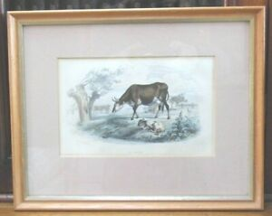 La Vache the COW antique engraving Charles Beyer c1840 framed cattle