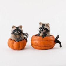 "EM0677 St/2 7"" Rascal Raccoon in Pumpkin Halloween Table Decoration Thanksgiving"
