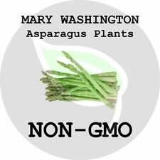 GIANT Mary Washington Asparagus Crowns Roots Live Plants Non-GMO Garden Heirloom