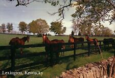 Horses in Lexington, Kentucky, Meadow, Trees, Fence, KY -- Animal Horse Postcard