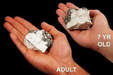 "Howlite 3"" 6-10 Oz Healing Crystals Crown Chakra Reiki Metaphysical Gem Stone"