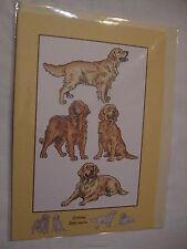 CARTE + ENVELOPPE - chien   GOLDEN RETRIEVER