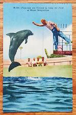 Porpoise Show Seaquarium Miami Florida Fl Postcard 1957 Curteich