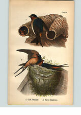 1890 Bird Colored Lithograph Litho Plate Cliff Swallow Barn Swallows
