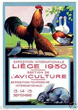 POSTCARD BELGIAN 1930 LIEGE INTL EXPO AVICULTURE FOWL RABBIT