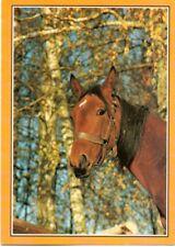 Pferdepostkarte Pferd Polen Kopf horse postcard cheval carte postale caballo