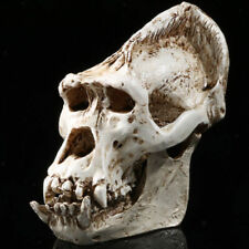 8.6cm Replica Resin Orangutan Skull Head Bone Drawing Skeleton Home Bar DECO