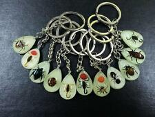 50 PCS RARE MIX INSECT GLOW LUCITE KEYCHAIN JEWELRY TAXIDERMY GIFT