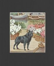 Schipperke - Vintage Color Dog Print - Matted