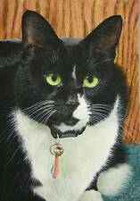 """ACEO """"HARRY, THE PERSNICKITY CAT"""" LTD ED BLACK WHITE CAT BY CATMANDREW STROUBLE"""