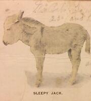 Postcard, 1905 Sleepy Jack, Jackass, Donkey, Animals Tacoma Vintage P55