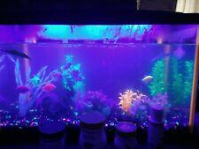 New listing Ten Gallon GloFish Tank