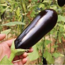 200 pcs Purple Eggplant seeds delicious vegetable