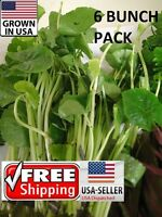 6 bunches Brazilian Pennywort plants Easy Aquarium aquascaping planted tank pond