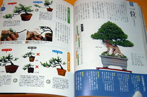Make BONSAI understands with photographs book from japan japanese rare #0096