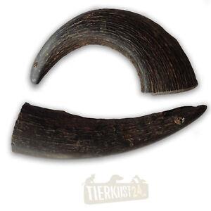 Gaya Hornstück S, Kausnack, Kauhorn vom Büffel, Kauknochen, Wasserbüffelhorn
