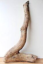 Schwemmholz Treibholz  Driftwood 1 XXL Skulptur  Basteln  Terrarium Weihnachten