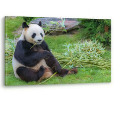 Giant Panda Bear eating Bamboo China Large Canvas Wall Art Picture Print A0 A2