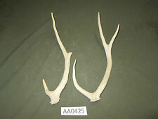 2 Axis Deer Sheds,Horn,Antler,Handle,Crafts,Decor AA0425
