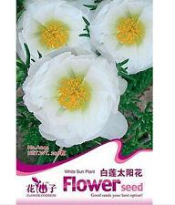 FD1585 White Sun Plant Flower Seed White Portulaca Grandiflora ~1 Pack 200 Seed~