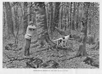 HUNTING RUFFED GROUSE SHOOTING AN OPEN SHOT BY A. B. FROST DOG POINTER HUNT