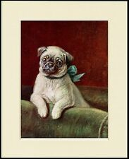 PUG LITTLE DOG IN A CHAIR LOVELY DOG PRINT MOUNTED READY TO FRAME