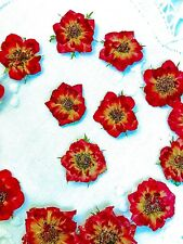 15 Mini Red Roses;Small Flowers;Red Flowers;Pressed Flowers;Dried Roses;Crafts