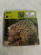1977 Editions Rencontre S.A. Lausanne Animal Flash Cards Tenrec 24-Pack