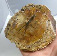 Awesome petrified wood slice, both sides polished, Madagascar, 204 grams