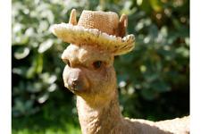 Llama In Boots & Hat Resin Garden Lawn Sculpture Ornament Statue 30cm Tall CUTE!