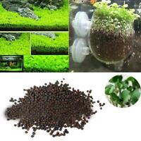 Aquarium aquatique plante aquatique herbe herbe premier plan décor