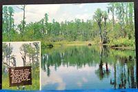 Okefenokee Swamp Park Waycross Georgia Vintage Postcard