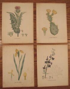 4 antique botanical prints Indian Fig Cactus/Milk Thistle/Iris/Candle larkspur