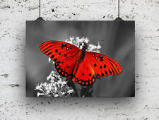 BLACK AND WHITE RED BUTTERFLY  PRINT , PICTURE POSTER WALL ART