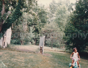 A Girl, A Dog, And A Fence FOUND PHOTOGRAPH Color FREE SHIPPING Original 81 10