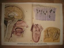 VINTAGE 1977 RUSSIAN SOVIET MEDICAL HUMAN BODY DISPLAY POSTER ON TEXTILE BASE
