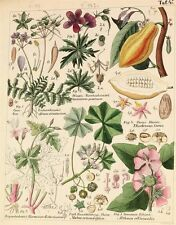 1837 | WONDERFULLY illustrated GERMAN book on PLANTS | flora | hand-col plates