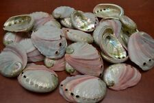 "25 PCS NATURAL RED ABALONE SEA SHELL (ONE SIDE POLISHED) 2 1/2"" - 3"" #7116"