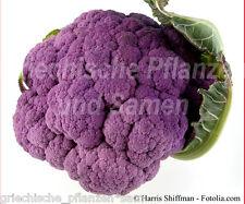 Blumenkohl Violetto 30 Graines lilas délicieux exotique