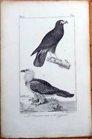 Le Caracara Noir, Le Gypaete - 1830s French Bird Print