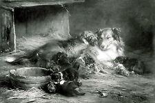 Print Farm Animals Happy Mother Dog Rough COLLIE Nursing Whelping Her Puppies