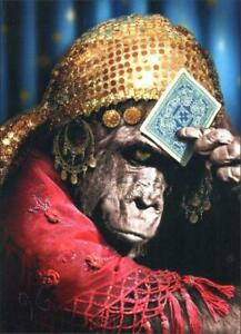 Birthday Greeting Card - Gorilla Fortune Teller