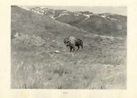 FREDERIC REMINGTON AMERICAN OLD WEST SOLITUDE SINGLE BUFFALO ON THE PLAINS